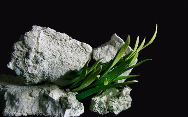 stonegrass